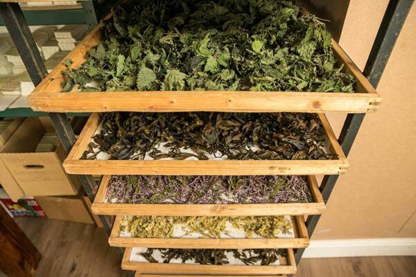 drying botanicals process